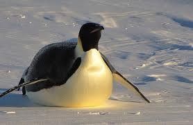 Как продвигать сайт под пингвином?