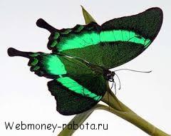 Разведение бабочек, как бизнес